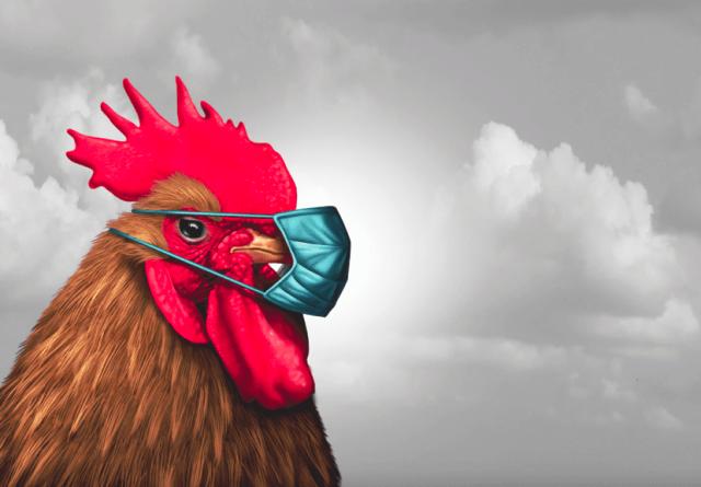 chicken-caranten.png